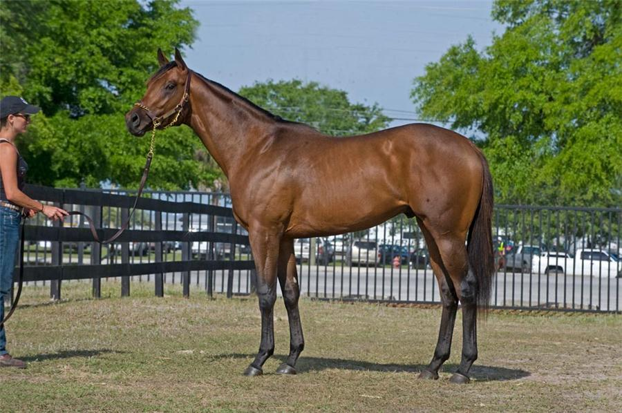 Humble and Hungry 2010 April OBS Juvenile Sale