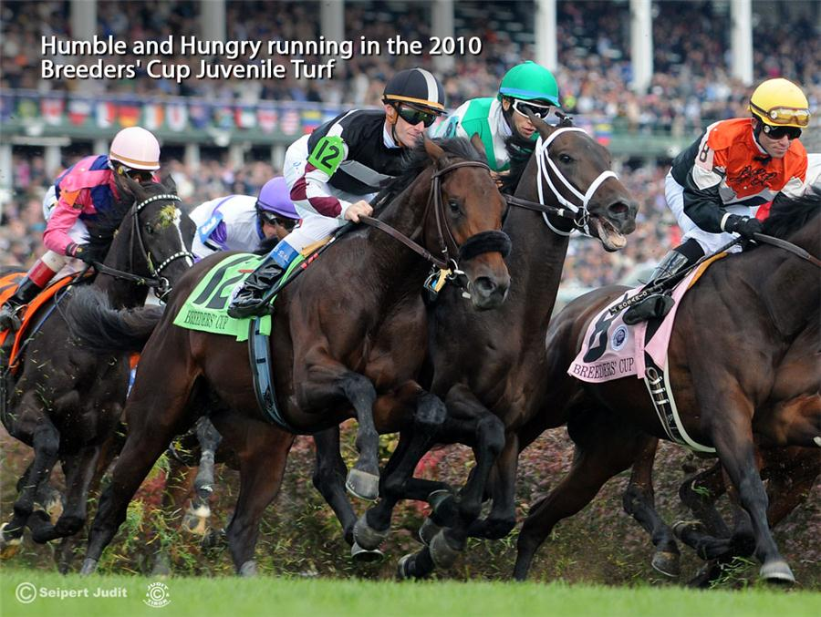 Humble And Hungry 2010 Breeders Cup Juvenile Turf